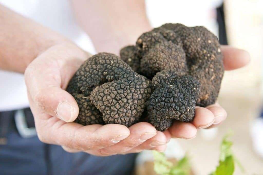 Truffles Grow