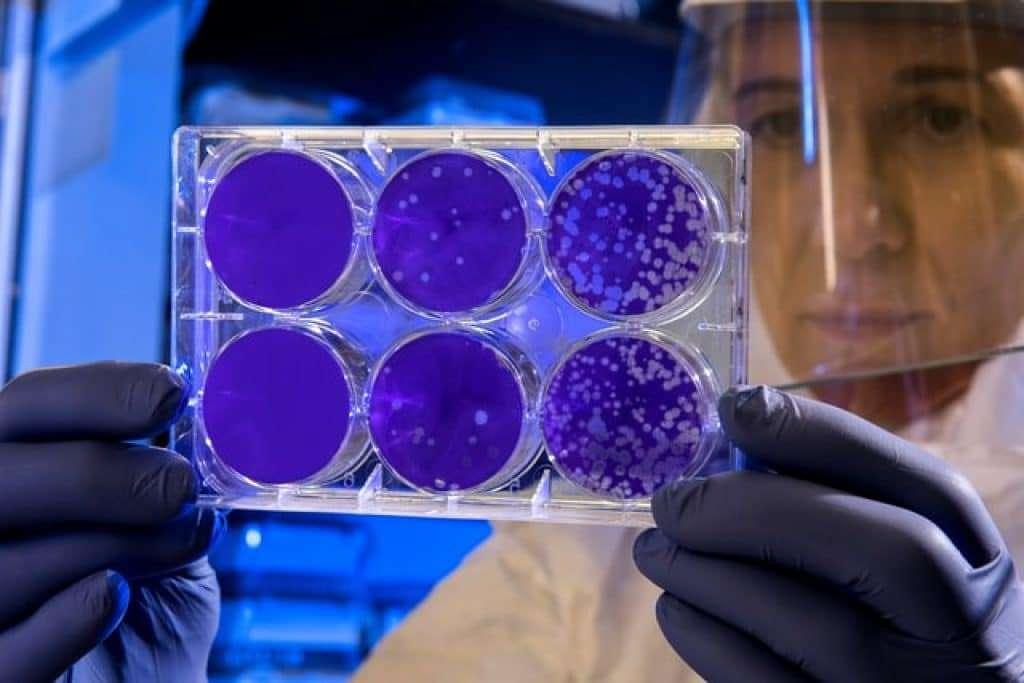 does oregano oil kill good bacteria