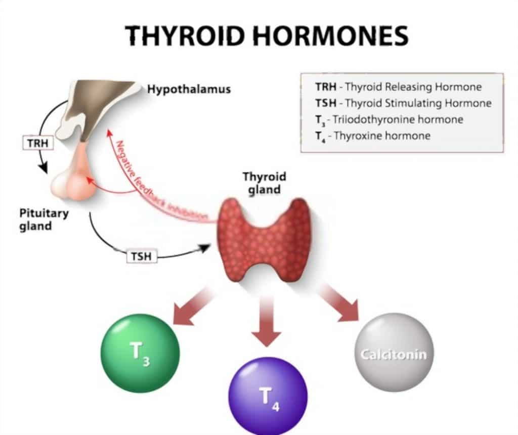 how long can you go without thyroid medication