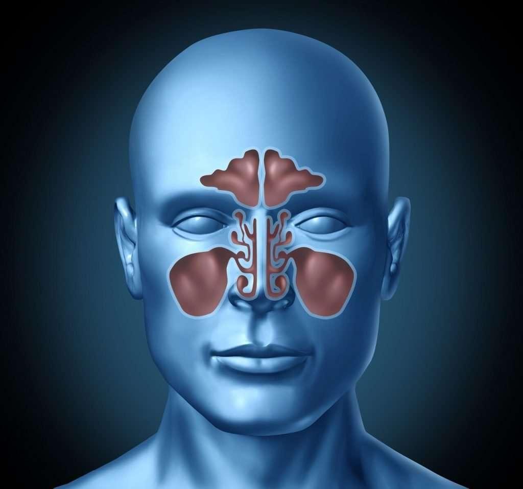 nasal-cavity