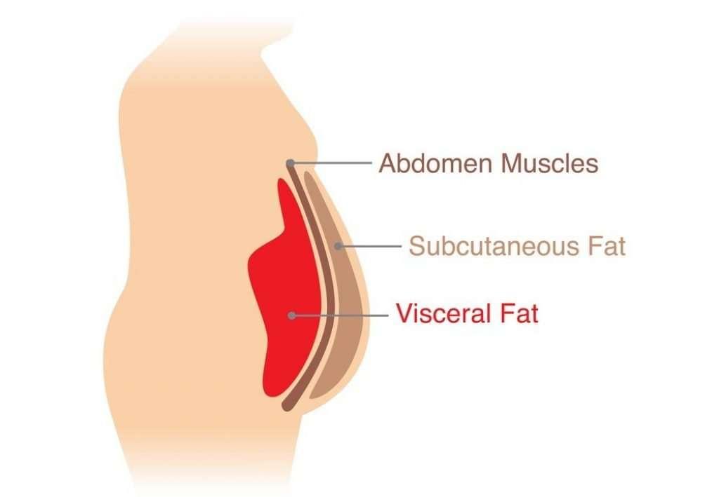 visceral-fat