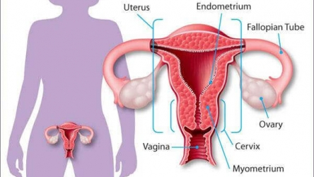 Rapid Weight Loss After Hysterectomy: The Causes and Execution
